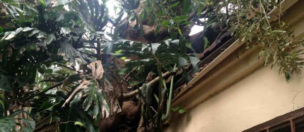Fallen tree on house roof.